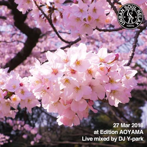 #33 露天風呂で夜桜花見