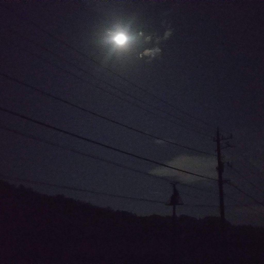 月が綺麗ですね。月によって変わる生き物の動きの話。