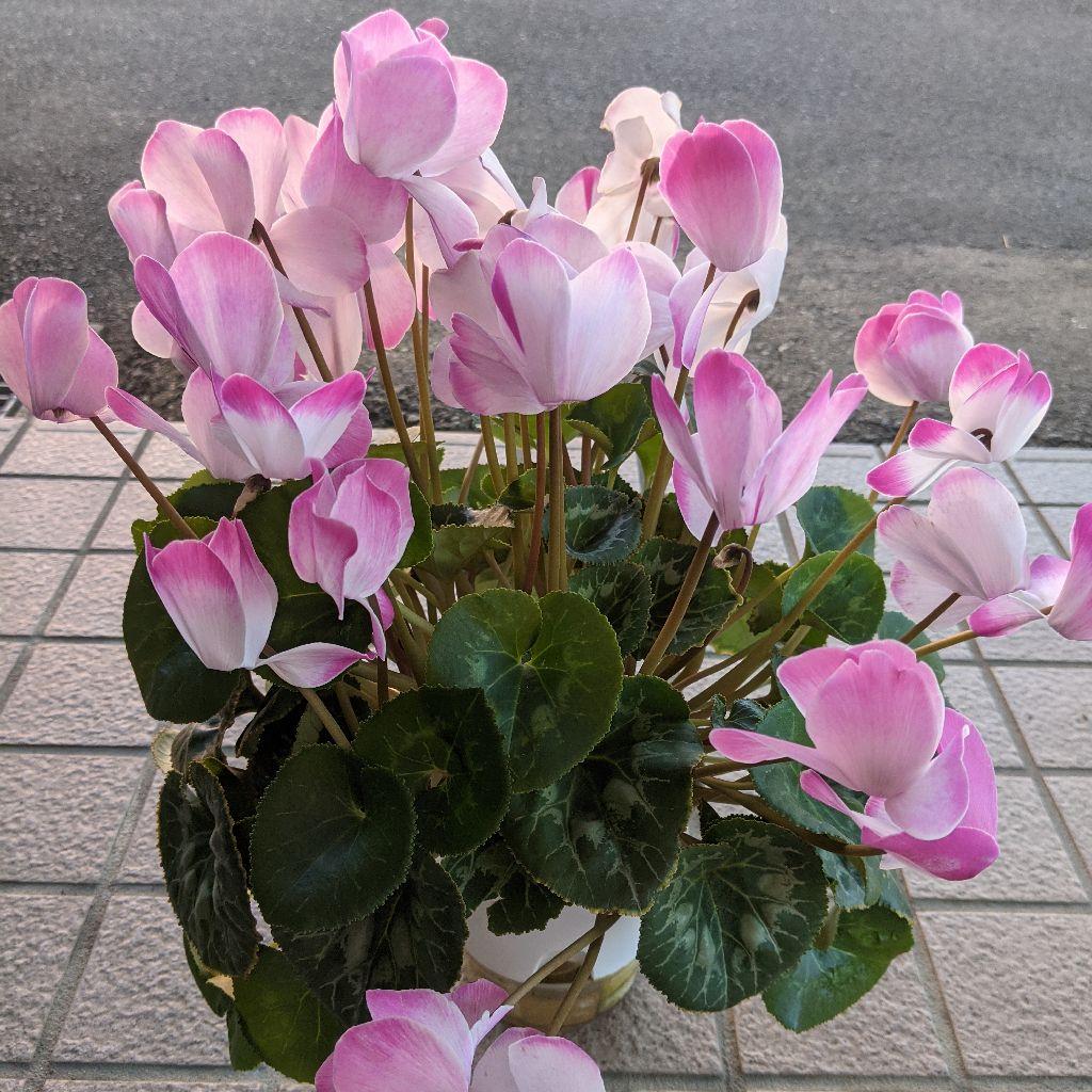 植物さん、綺麗ですね!大切にしますね!