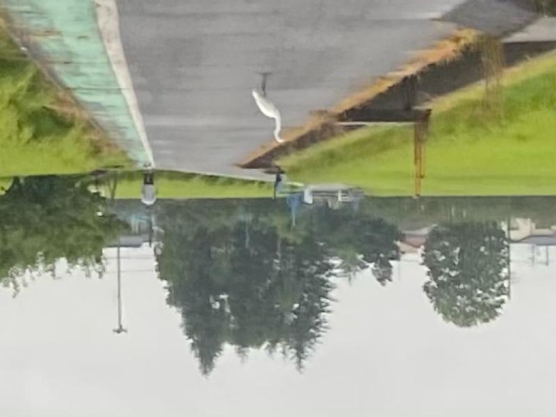 朝ラン19℃。微雨の中アベチャリさんを想いながらの大相撲「大逆転は起こりうる。」という広告。#149