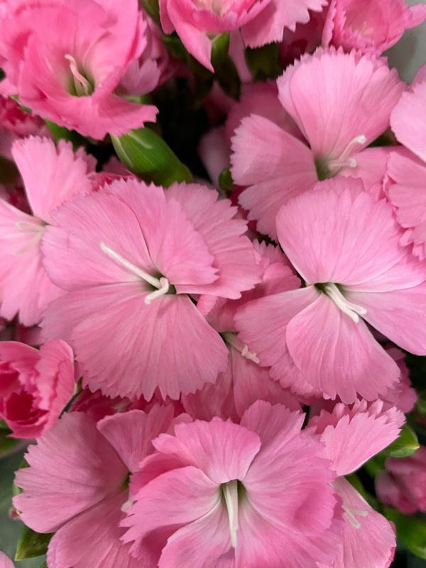 10月19日の誕生花と花言葉