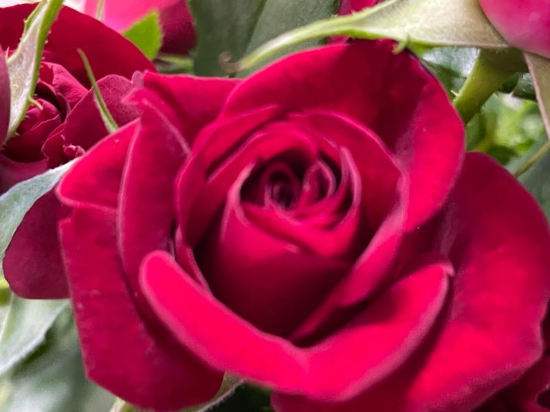 10月20日の誕生花と花言葉