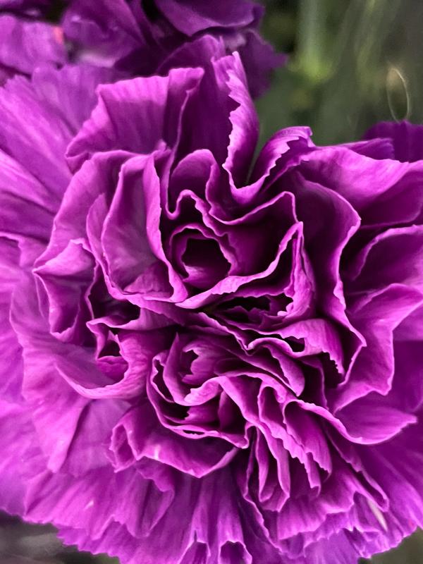 10月21日の誕生花と花言葉