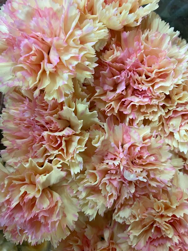 10月23日の誕生花と花言葉