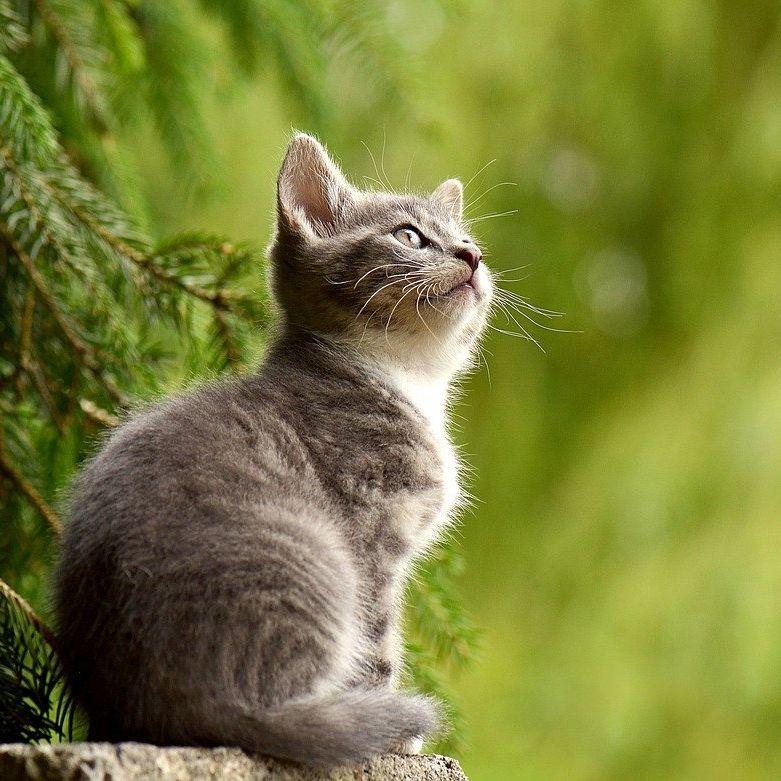 夏目漱石  猫の墓(朗読)