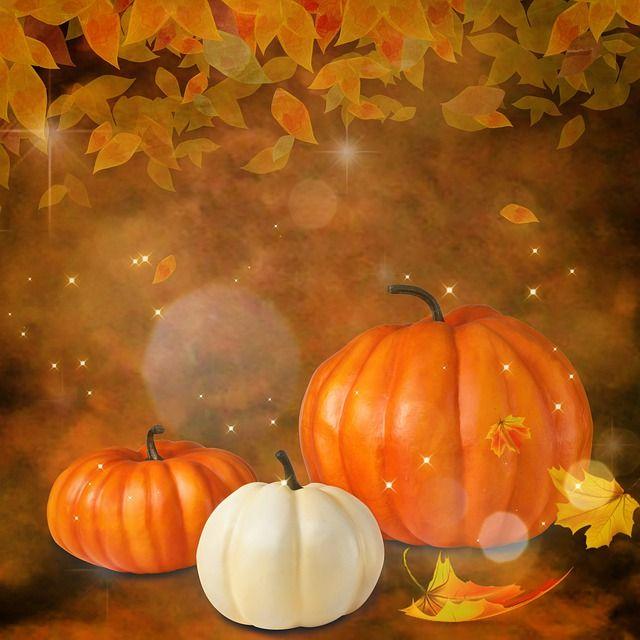 お料理配信~かぼちゃの種とわた~