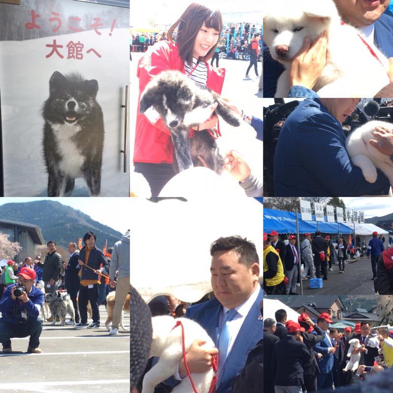 秋田犬保存会 展覧会の裏話します