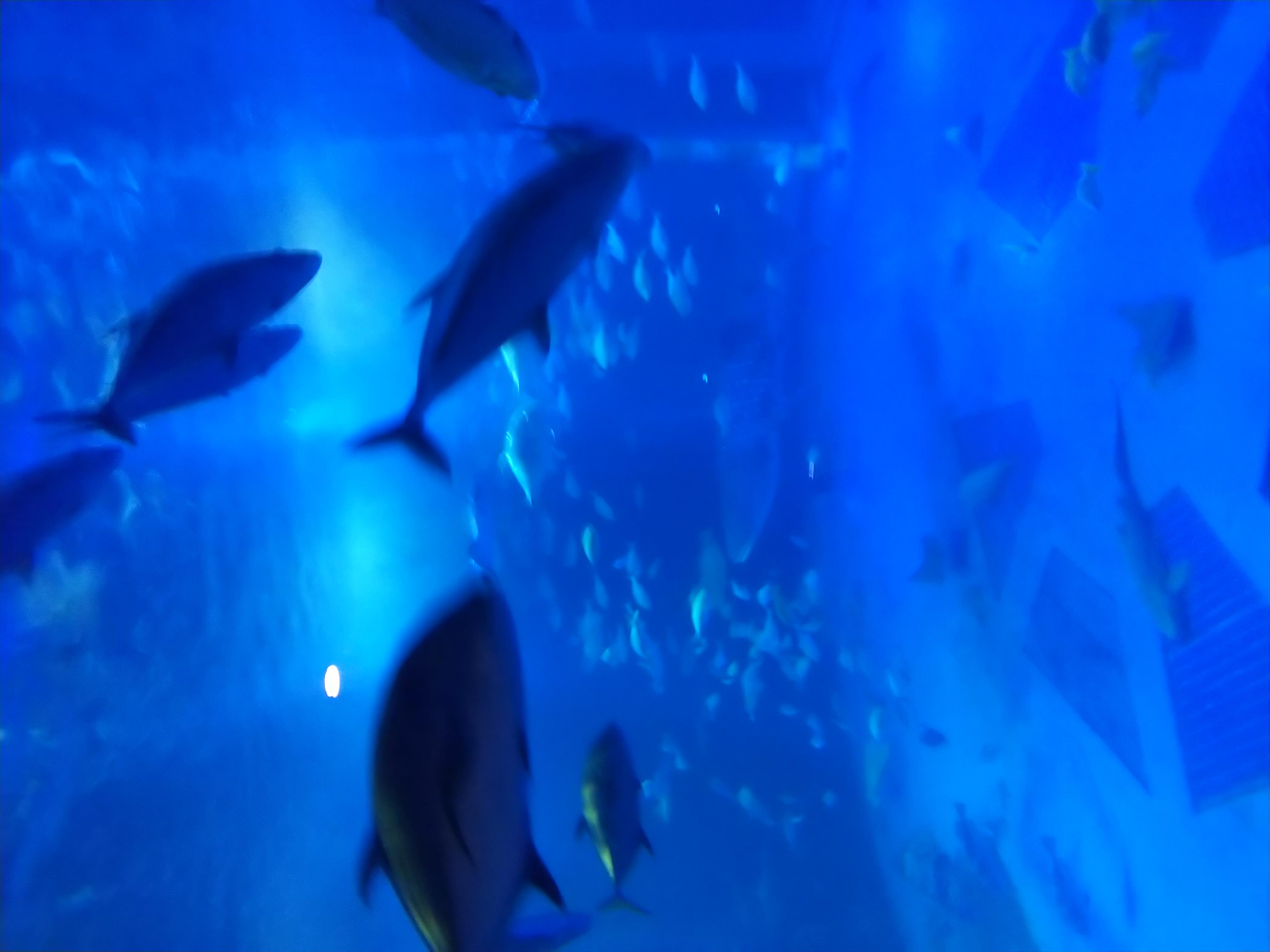 五十六回、水族館と相棒感想とお題ガチャ