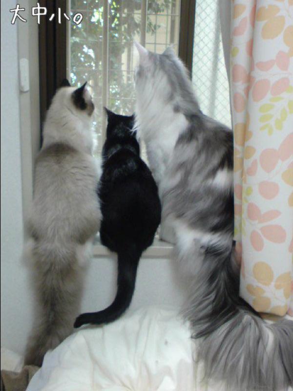 【トークリレー2020】うちの猫のちょっと変わってるところの話