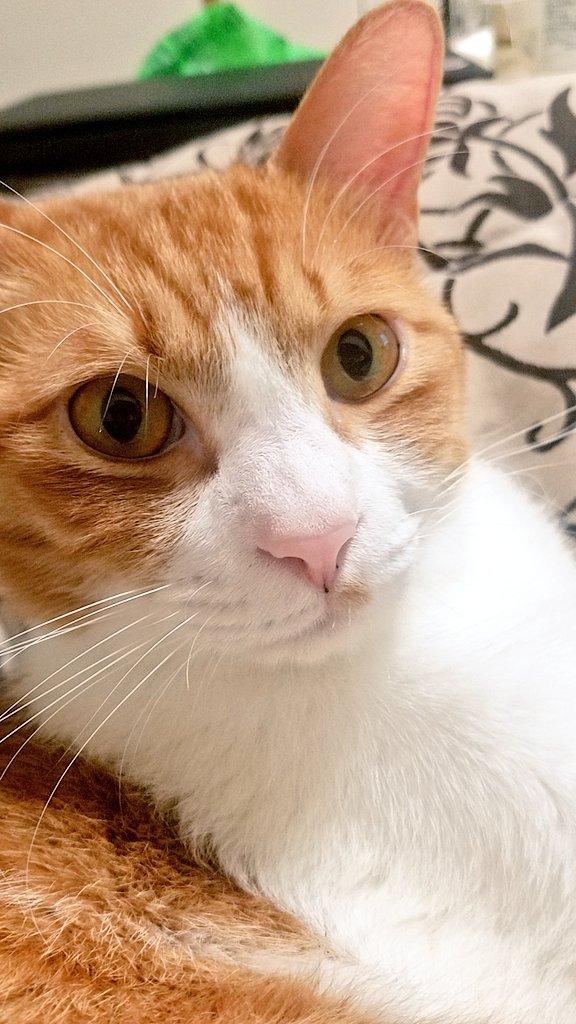 猫シェルター店員vtuber最初の名乗りを考える