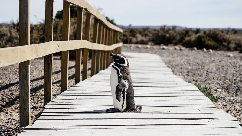 朗読 Penguin Highway