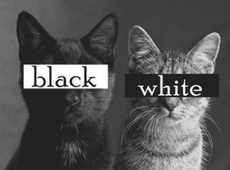 白黒ハンガーのスキマに放送局