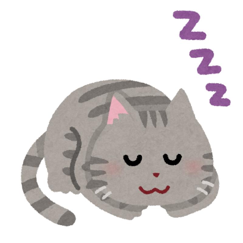 #6 タイの猫に愛を伝える方法