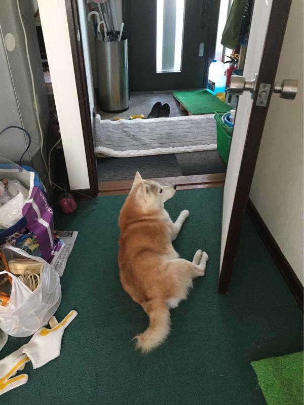三國レストランのオールナイトミクニッポン#83『犬の日!!ワンワンワン!!』