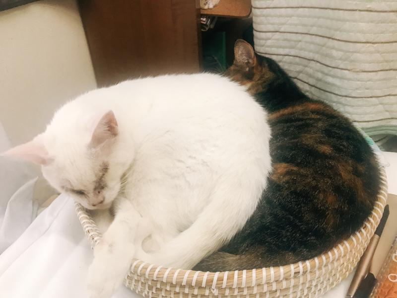 猫撫でオタク