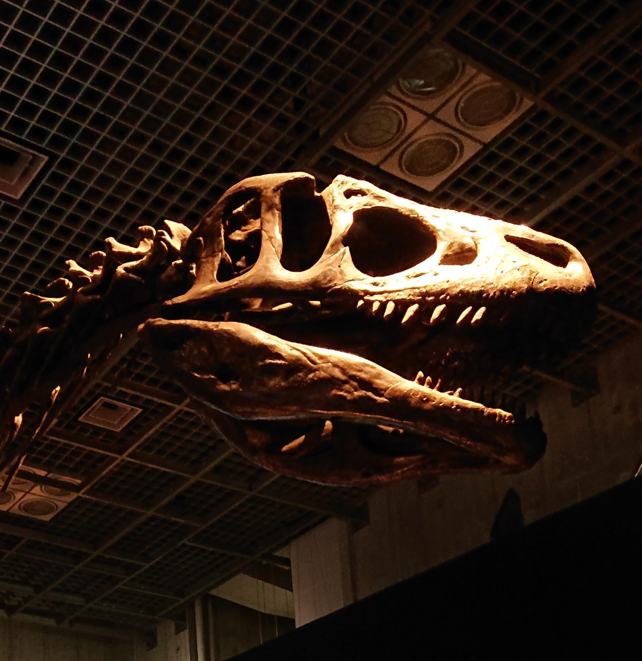 File1:上野アロサウルス事情