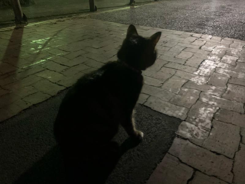 道端の猫ちゃんとの再会を果たし、しばらく会話しました🐱