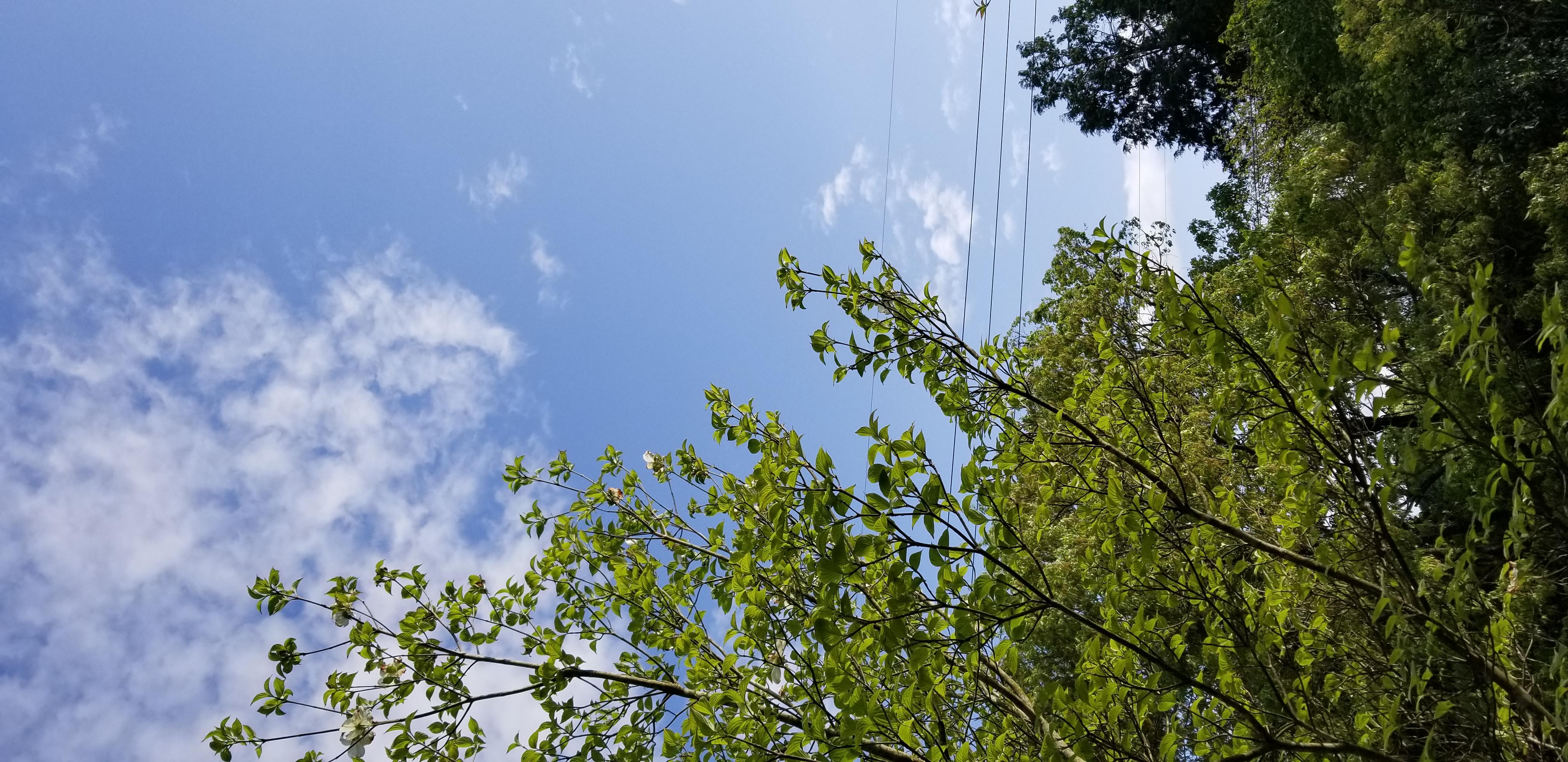 #515.ト書きのラジオGW編『自宅にて.山際の風と鳥の声』
