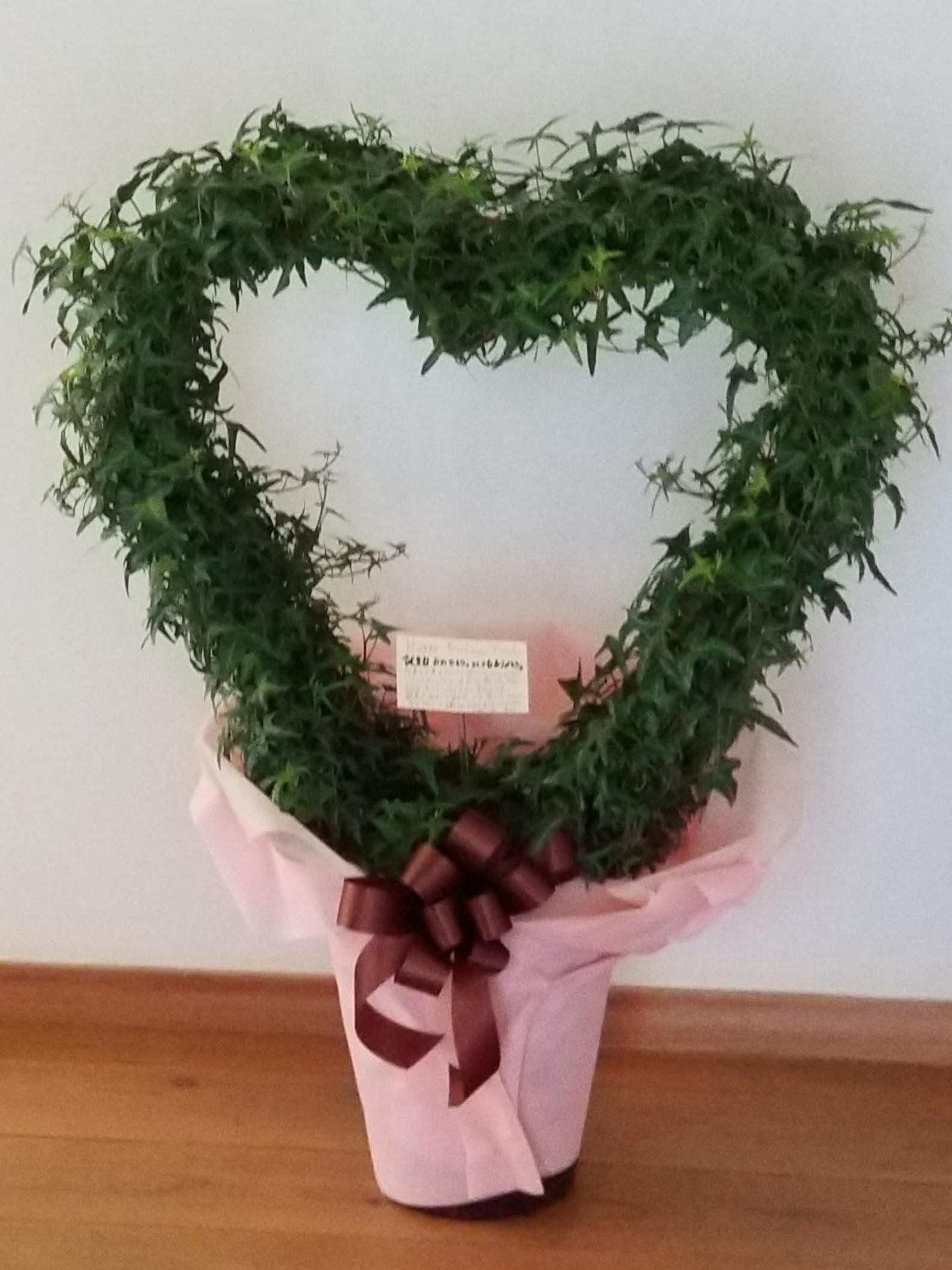 🌿観葉植物【アイビー】の素人なりの育成方法