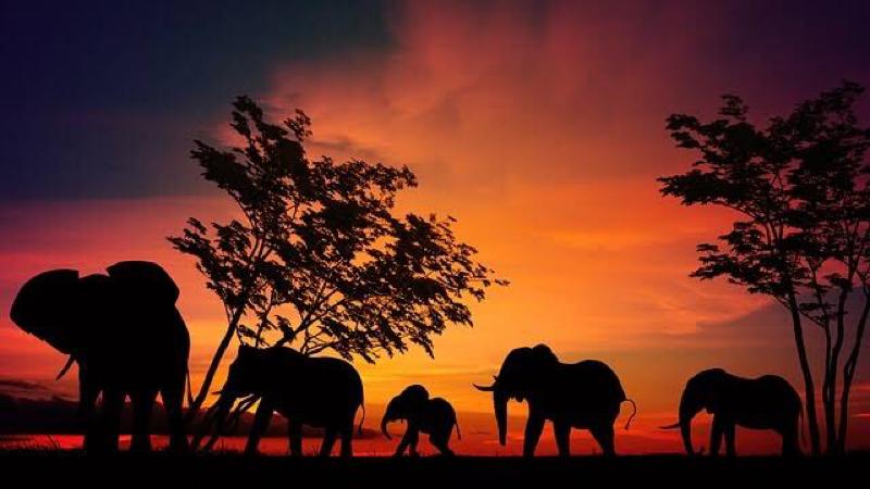 アフリカのことわざ