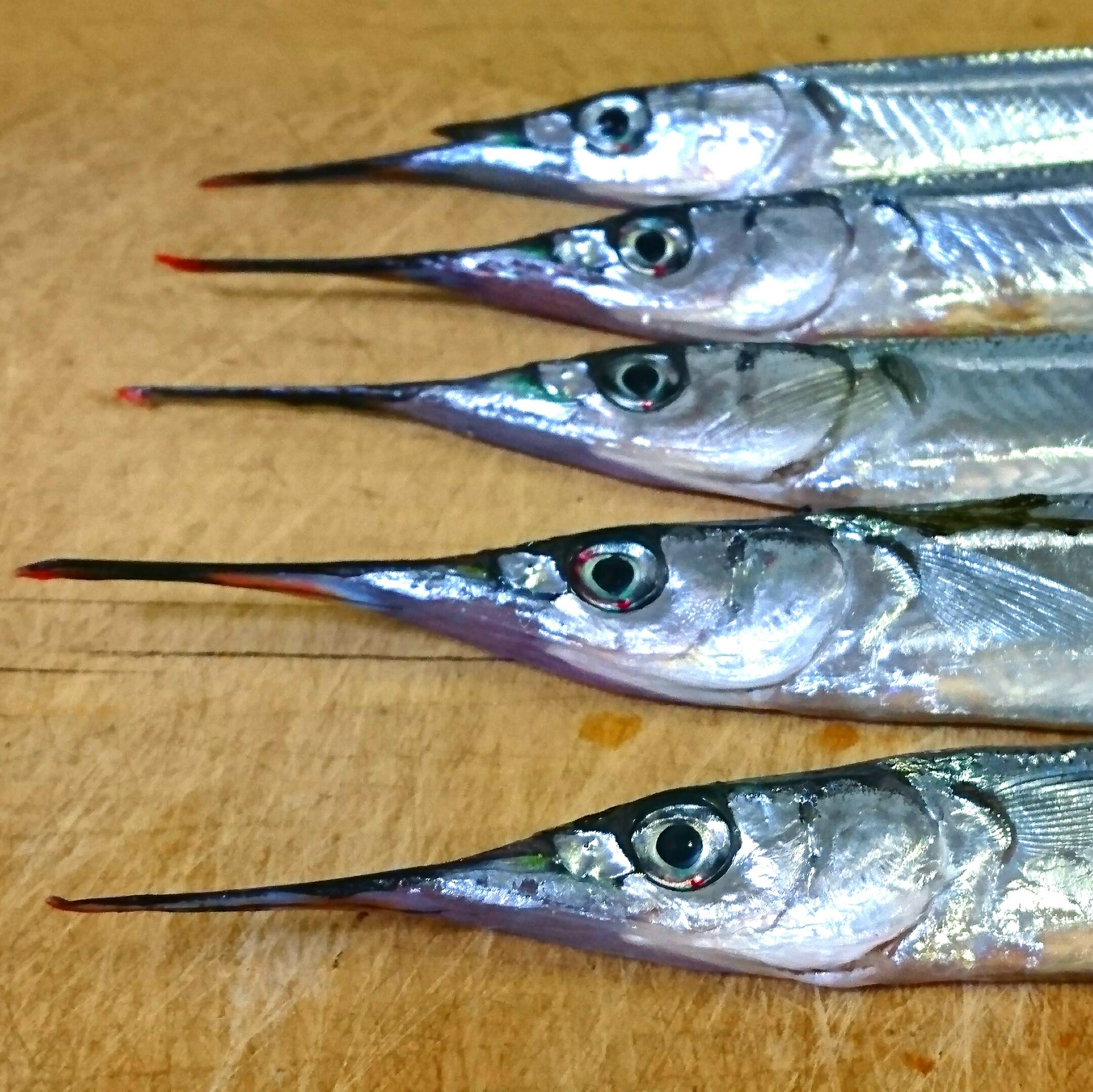 #1 いま刺身で旨い魚「サヨリ」をほめたたえる