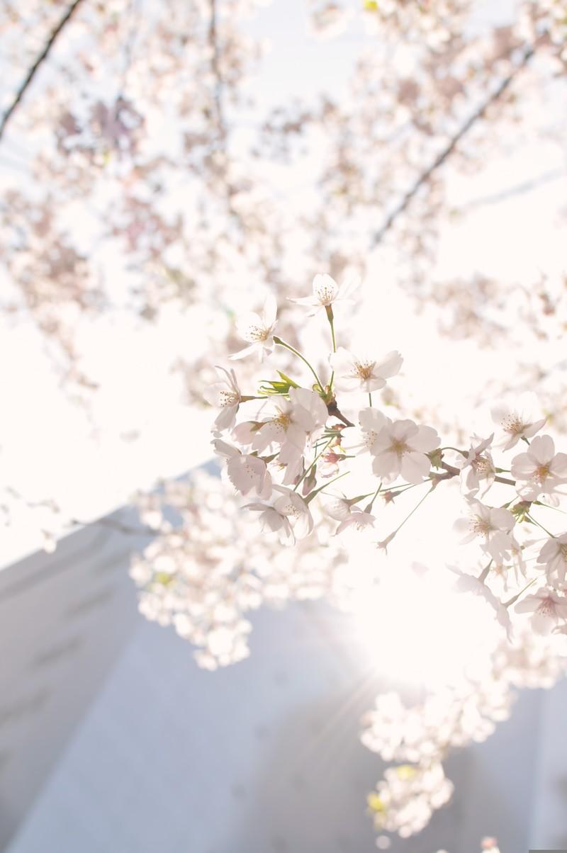 #1.「初めまして」と「冬の桜」。