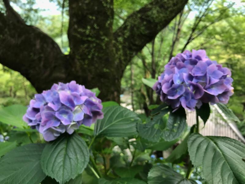 【女一人旅】弾丸日帰りで奈良県に行った話