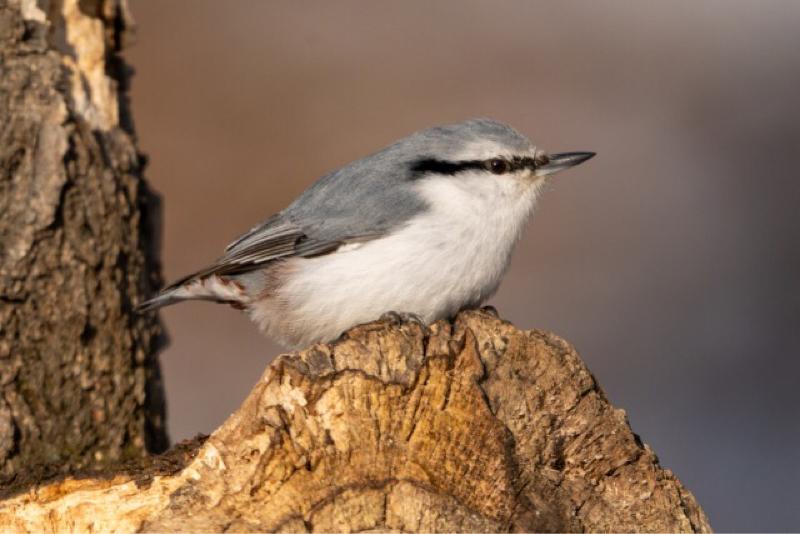 鳥によるガチのリツイートは人間のリツイートより優秀