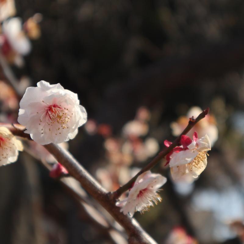 【今日は何の日】3月25日散歩にゴーの日