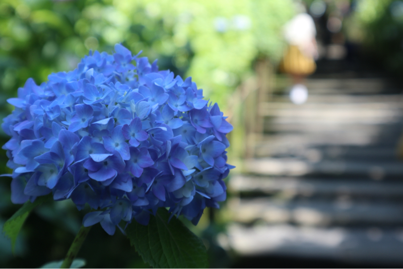 【今日は何の日】6月9日ドナルドダック誕生日