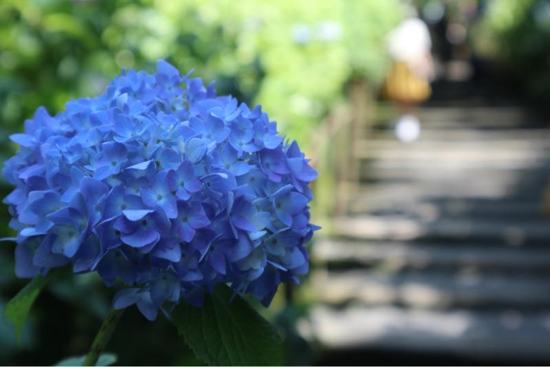 【今日は何の日】6月13日小さな親切記念日