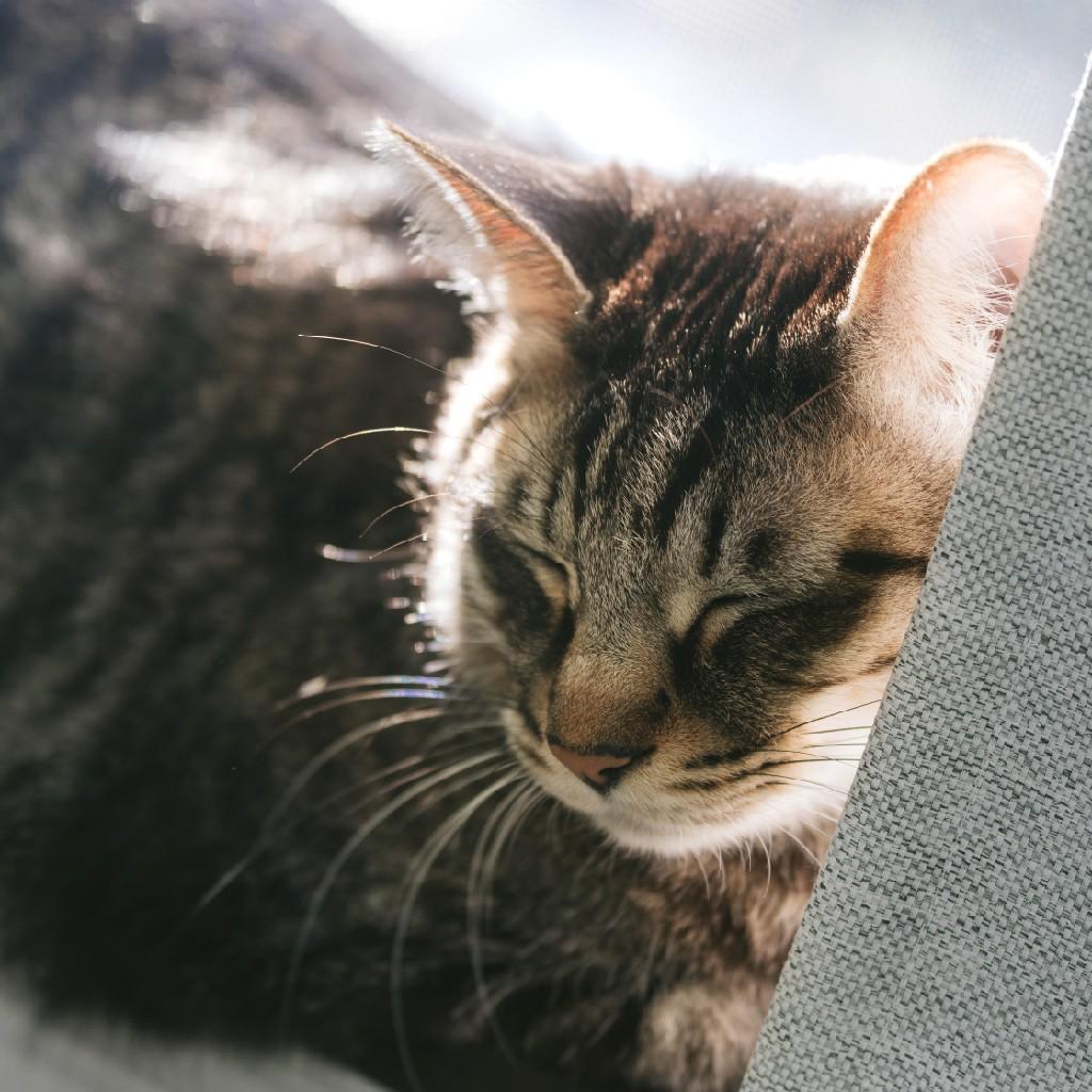 #61 ファミマで泣いた猫