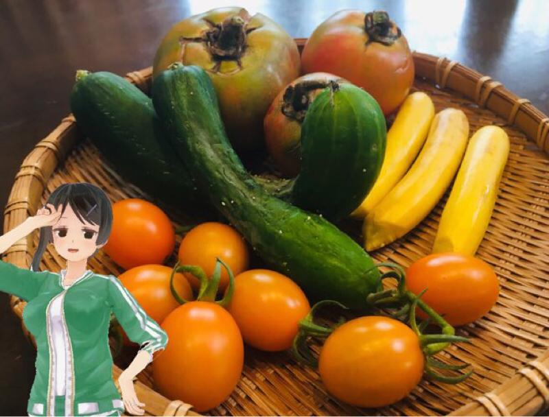 夏の家庭菜園での悲劇を回避するのです
