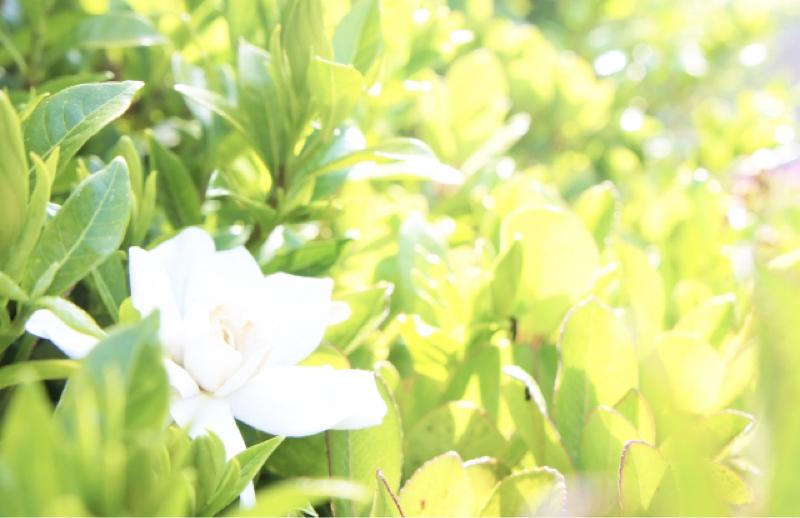 #106 ワタシの好きな匂い…臭い?カオり?その名は…