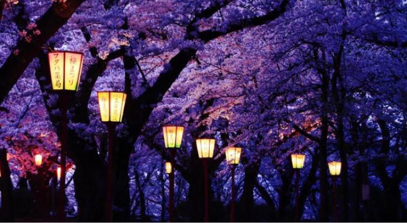 第45回 「夜桜」