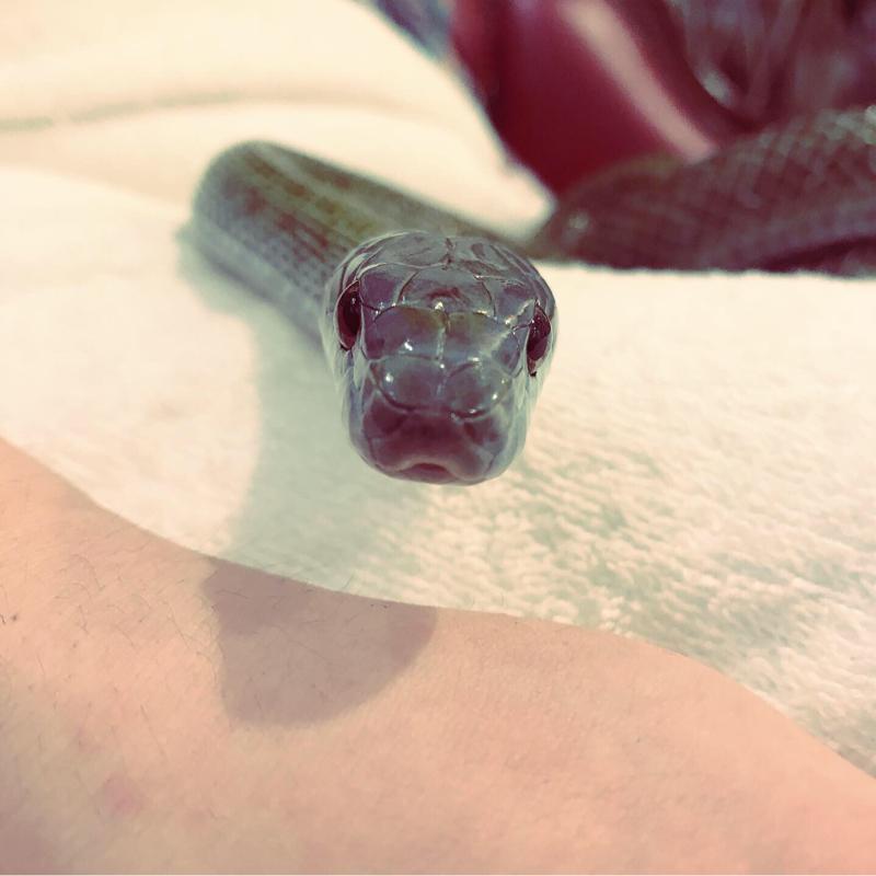 #4 遊女と蛇と私